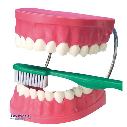 Zahnpflegemodell inkl. Bürste