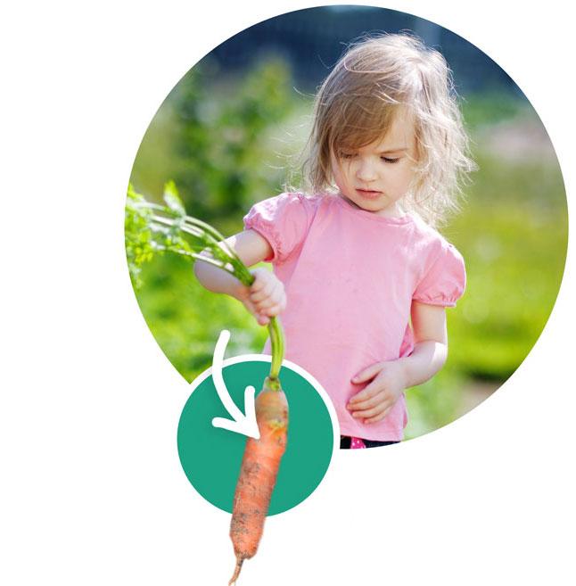 """Kräuter, Gemüse und Blumen pflanzen mit Kindern - das """"Gärtner 1x1"""""""